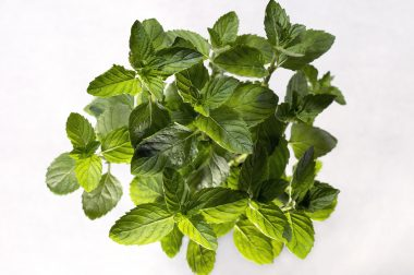 4 Clever Ways To Use Spearmint Essential Oil