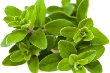 6 ways Marjoram can bring joy to your life!